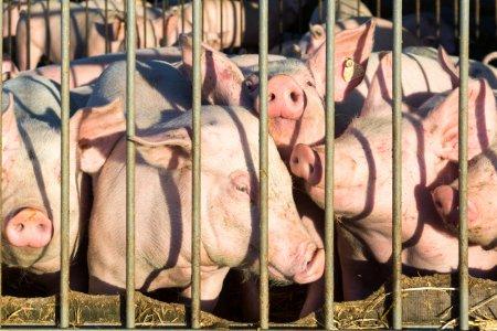Tierschutzvolksbegehren: warum du dir die Zeit nehmen solltest