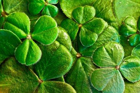 Grün, grüner, St. Patrick`s Day: Irische Partylust erobert die Welt