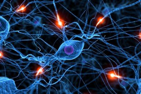Das Ende der Gehirnerkrankungen: ein Start-up, das Gehirnzellen