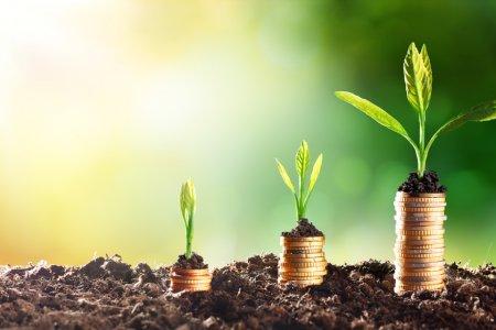 Nachhaltig leben mit wenig Geld – so funktioniert's!