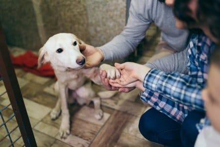 Haustier-Boom in der Corona-Zeit: Gefahren für das Tierwohl
